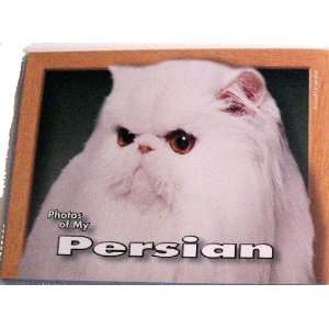 Photos of My White Persian Cat Photo Album Kitchen